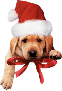 Com dizer Feliz Natal em várias línguas