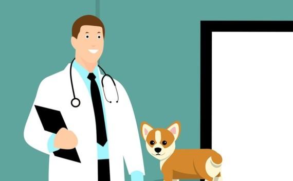 Hospital Veterinário da USP e da FMU – entenda como funciona